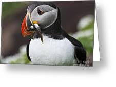 Puffin With Fish Greeting Card by Heiko Koehrer-Wagner