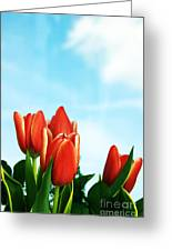 Tulips Background Greeting Card by Michal Bednarek