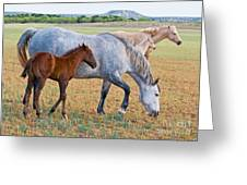 Wild Horse Mother And Foal Greeting Card by Millard H Sharp