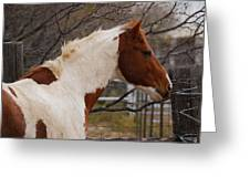 Paint Stallion Greeting Card by Thea Wolff