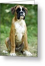 Boxer Dog Greeting Card by Jean-Michel Labat
