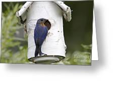 Eastern Bluebird Greeting Card by Linda Freshwaters Arndt