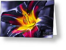 Flower Burst Greeting Card by Gunter Nezhoda
