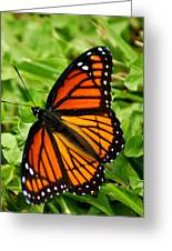 Monarch Butterfly Greeting Card by Carol Toepke