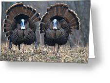 Jake Eastern Wild Turkeys Greeting Card by Linda Freshwaters Arndt