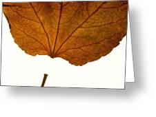 Leaf Greeting Card by BERNARD JAUBERT