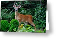 6-pointer Greeting Card by Angel Cher