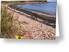 Prince Edward Island coastline Greeting Card by Elena Elisseeva