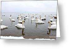 60 Swans A Swimming Greeting Card by Laurel Best