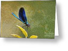 Dragonfly Greeting Card by George Atsametakis