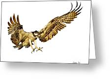 Osprey Flight Greeting Card by Larry Linton