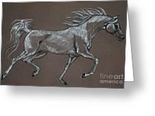 Arabian Horse  Greeting Card by Angel  Tarantella