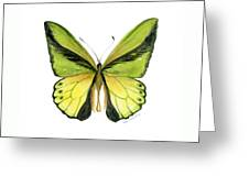 8 Goliath Birdwing Butterfly Greeting Card by Amy Kirkpatrick