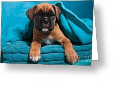 little Boxer dog puppy Greeting Card by Doreen Zorn