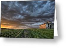 Newly Planted Crop Greeting Card by Mark Duffy