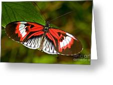 Piano Key Butterfly Greeting Card by Millard H. Sharp