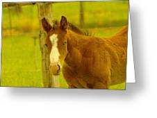 A Blue Eyed Colt Greeting Card by Jeff  Swan