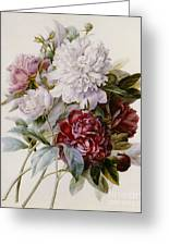A Bouquet Of Red Pink And White Peonies Greeting Card by Pierre Joseph Redoute