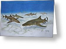 A Bushel Of Lemon Sharks Greeting Card by Jeff Lucas