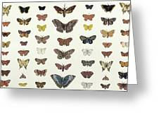 A Collage Of Butterflies And Moths Greeting Card by French School