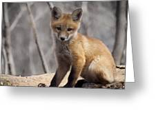 A Cute Kit Fox Portrait 1 Greeting Card by Thomas Young