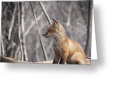 A Cute Kit Fox Portrait 2 Greeting Card by Thomas Young