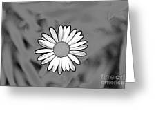 A Daisy  Greeting Card by Jay Nodianos