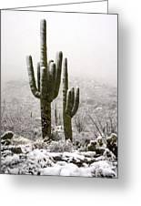 A Desert Southwest Snow Day  Greeting Card by Saija  Lehtonen