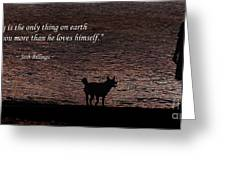 A Dog Greeting Card by Olahs Photography