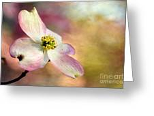 A Dogwood Bloom Greeting Card by Darren Fisher