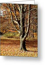A Fall Tree In New England Greeting Card by Mike McCool