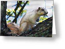 A Fox Squirrel Pauses Greeting Card by Betsy C  Knapp