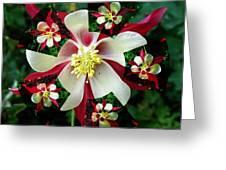 A Fractal Granny Bonnet Greeting Card by Nancy Pauling