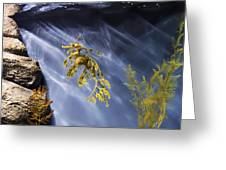 A Funny Seahorse--leafy Seadragon Greeting Card by Angela A Stanton