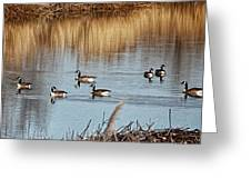 A Geese Gathering - Greeting Card Greeting Card by Bill Kesler
