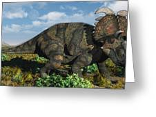 A Herd Of Albertaceratops Greeting Card by Mark Stevenson