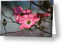 a kiss of pink Greeting Card by Mary Zeman