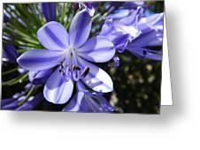 A Little Closer Greeting Card by Leana De Villiers