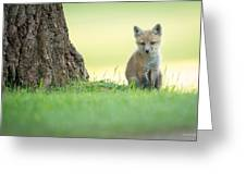 A Lone Kit Greeting Card by Everet Regal