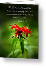 A Mountain Flower  John 3 16 Greeting Card by Randall Branham