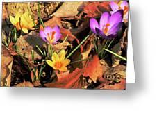 A New Season Blooms Greeting Card by Karol  Livote