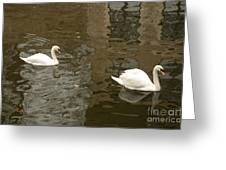 A Pair Of Swans Bruges Belgium Greeting Card by Imran Ahmed