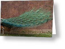 A Peacock Greeting Card by Ernie Echols
