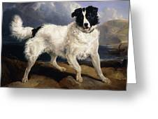 A Portrait Of Neptune Greeting Card by Sir Edwin Landseer