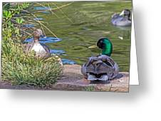 A Restful Moment Greeting Card by Kate Brown