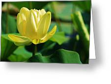 A Single Lotus Bloom Greeting Card by Bruce Bley