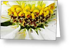 A Small Crown Of Glory Greeting Card by Sarah Loft