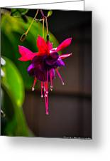 A Special Red Flower Greeting Card by Gandz Photography