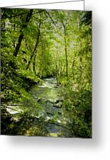 A Spring Day At Lithia Creek Greeting Card by Diane Schuster