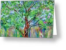 A Springy Notion Greeting Card by Regina Valluzzi